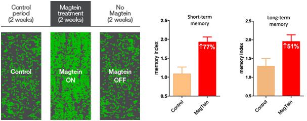 Magtein-study