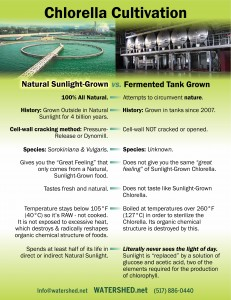 Chlorella-Cultivaton_Fermented_vs_sunlight_card_090915
