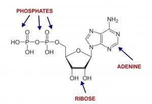Ribose_ATP