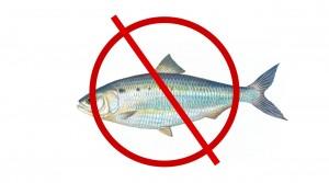 Fish NO